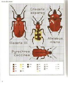 Gallery.ru / Фото #10 - MARABOUT Insects - tatasha