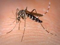 Marche: Nuovo #intervento di #disinfestazione contro zanzare e pappataci (link: http://ift.tt/2bse9jN )