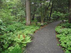pine woodland garden - Szukaj w Google