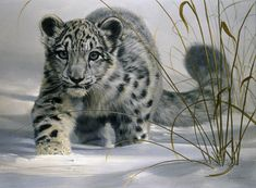 Yes. I want one. On my ranch. I'm sure my horses and my snow leopard would get along famously.