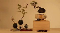 Air Plants, Indoor Plants, Indoor Outdoor, Indoor Gardening, Bonsai Trees For Sale, Do It Yourself Kit, Indoor Bonsai, Colossal Art, Bonsai Garden