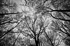 trees black and white - Google Search