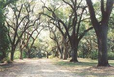 Butler Greenwood Plantation Photos | Live Oak alley, Butler-Greenwood plantation, esablished in 1796, La (8 ...
