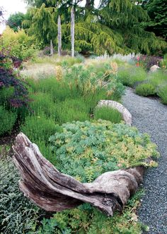 garden-native-plants-2.jpg
