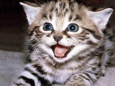Un chat heureux