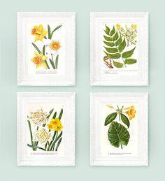 Vintage Botanical Prints. Set of 4 encyclopedia Illustrations.7