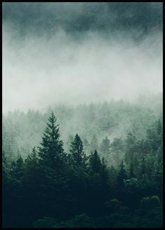 Treetop Fog - Shop this print at Poster Store