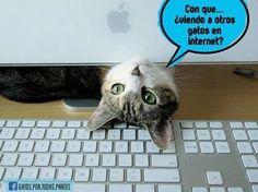 https://www.facebook.com/gatos.por.todas.partes/photos/pb.207350112727036.-2207520000.1415027758./490236947771683/?type=3