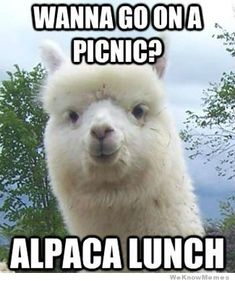 animals, jokes, lunches, funni, picnics