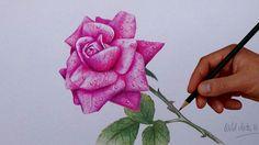 Rose with simple colored pencils dahlia flower, colouring techniques, simpl Colour Pencil Shading, Color Pencil Art, Simple Flowers, Colorful Flowers, Dahlia Flower, Flower Wall, Pencil Painting, Colouring Techniques, Coloured Pencils