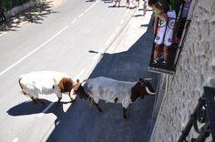 viva madrid que es mi pueblo | Algunos de los momentos del encierro. Fotos: Casamar-Iker González