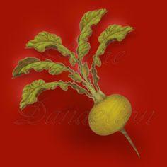 Heirloom Golden Ball - Boule D'or Turnip Seed Heirloom Golden Ball Boule D'or Turnip Seed Sustainable Living [1-68-280] - $2.00 : Azure Dandelion, Heirloom Seeds and Folk Art