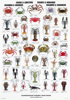 Underwater Creatures, Ocean Creatures, Fish Chart, Crab And Lobster, Kunst Poster, Poster Poster, Salt Water Fish, Types Of Fish, Nature Posters