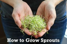 How to Grow Sprouts-looks so easy.  Always afraid to buy them in the store from all the bad things you hear.