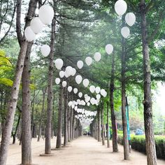 Solo NAMIn! . . . #Zafventures #korea #southkorea #koreatrip #visitkorea #visitseoul #travel #travelasia #travelgram #igtravel #travelphotography #traveldiary #kdrama #filmlocation #island #lantern #adventure #trees #wanderlust #backpacking #latergram http://tipsrazzi.com/ipost/1521045641471941216/?code=BUb1vO7F1pg