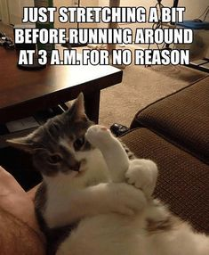 Cats Love To Work Out