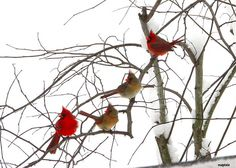 A cluster of cardinals