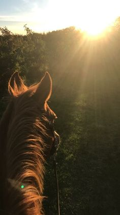 I do wish I could do this every morning. What a great way to live Cute Horses, Pretty Horses, Horse Love, Beautiful Horses, Horse Wallpaper, Animal Wallpaper, Cavalo Wallpaper, Animals And Pets, Cute Animals