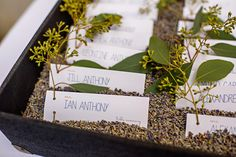 herb themed wedding escort cards & table names | Matt & Ian's laid-back, homegrown Maryland wedding at Patapsco Female Institute | Images: Russ Hickman Photography