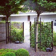 Trädgård vi har ritat i Osby, KlotRobinia, Väggar med nät och Murgröna, svarta stenar och Buxbomklot #trädgårdsinspiration #gardeninspiration #buxbom #murgröna #klotrobinia