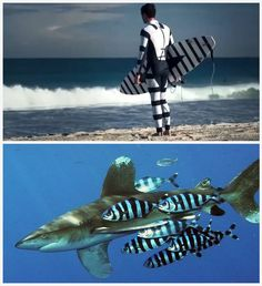 What a great idea!!! Wetsuit makes u invisible to sharks!