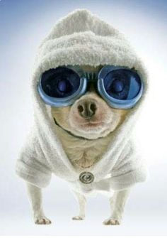 One cool dog.