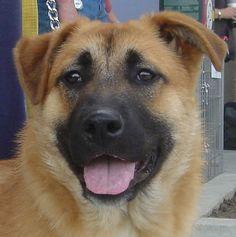 Found Dog - Unknown - Toronto, ON, Canada M6N 4B3 on June 10, 2015 (13:00 PM)