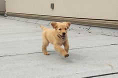 This Slow Motion Puppy Is Having The Perfect Day