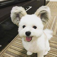 So cute  . . . #dogs #cutedogs #dogsarefamily #instaanimal #instaanimals #instadog #dogagram #dogsarelove #dogofinstagram #caesdeportugal #caes #instaday #instadaily #funnydog #doglovers #doglover #odonocuida
