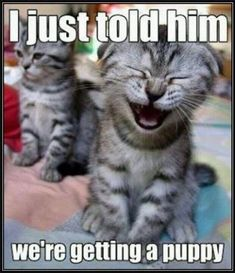 I told him we were getting a puppy funny memes animals cats puppy meme funny quotes humor
