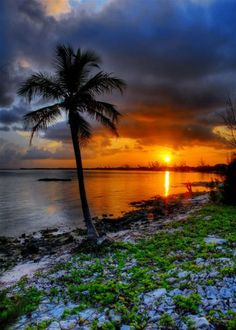 Palm sunset, Grand Cayman Island - proud to say I've been here.wishing I could go back Pretty Pictures, Cool Photos, Beautiful World, Beautiful Places, Wonderful Places, Amazing Places, Beautiful Sunrise, Belle Photo, Beautiful Landscapes