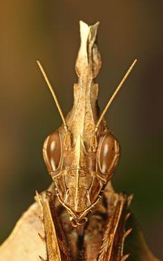 Mantis by karthi keyan on 500px
