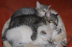 kitten love by Kreative Capture, via Flickr