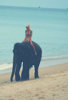 riding an elephant on the beach... just a normal day...