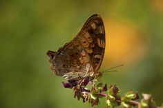 Butterfly II by EDEMIN RAMIREZ viewfinder image production on 500px