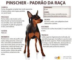 Padrão da raça Pinscher (Deutscher Pinscher)