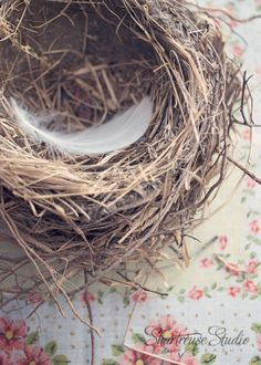 I would love a whole wall of different bird nests... you know, when they're done with them. What a work of art!