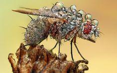 Pakan_insectos_magnificados_02