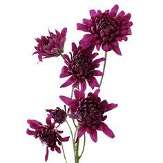FiftyFlowers.com - Purpleberry Dahlia Style Cushion Flower