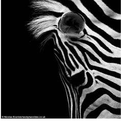 El lado más oscuro de la belleza animal (Fotos) | Curiosidades