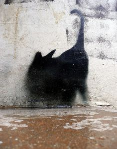The cat was there, or only her shadow. One can be as good as the other, at the right time.