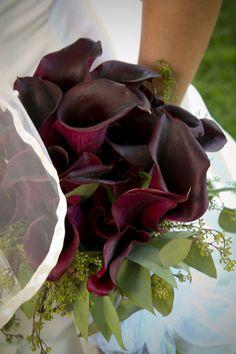 dark plum calla lilies. PLUM(EGGPLANT)? SILVER(PLATINUM)?BLACK? WHAT TO DO?