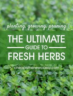 New to herb gardening? Wonder what's edible or has medicinal properties? Learn here about planting, growing and pruning your own fresh herbs.