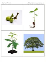 Forest theme ideas This sequencing of the tree life cycle could also be used during Life Cycles Montessori Science, Montessori Practical Life, Preschool Education, Preschool At Home, Preschool Themes, Preschool Science, Science Experiments Kids, Science Games, Sequencing Cards
