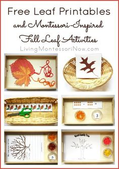 Long list of free leaf printables along with ideas for creating Montessori-inspired fall leaf activities using free printables Montessori Education, Montessori Toddler, Montessori Activities, Preschool Activities, Montessori Trays, Apple Activities, Montessori Elementary, Montessori Classroom, Autumn Activities For Kids
