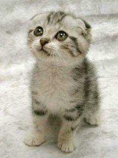 Milyen aranyos!