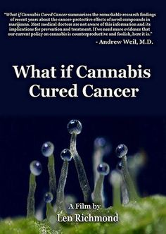 what if cannabis cured cancer documentary: a powerful and eye opening film...