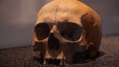 The analysis reveals what some of the very first Londoners looked like and where they came from.  These initial results come from four people: two had origins from outside Europe, another was from continental Europe and one was a native Briton.  The researchers plan to analyse more of the 20,000 human remains stored at the Museum of London.