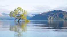 Stock Video Footage | Royalty Free Videos | Pond5 Stock Footage, Free Footage, Video Footage, New Zealand Mountains, Royalty Free Video, New Zealand Landscape, Change Picture, Free Stock Video, Artist Portfolio