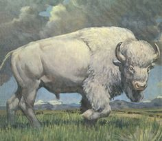 Great White Buffalo
